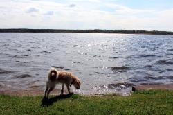 Torgau - Großer Teich
